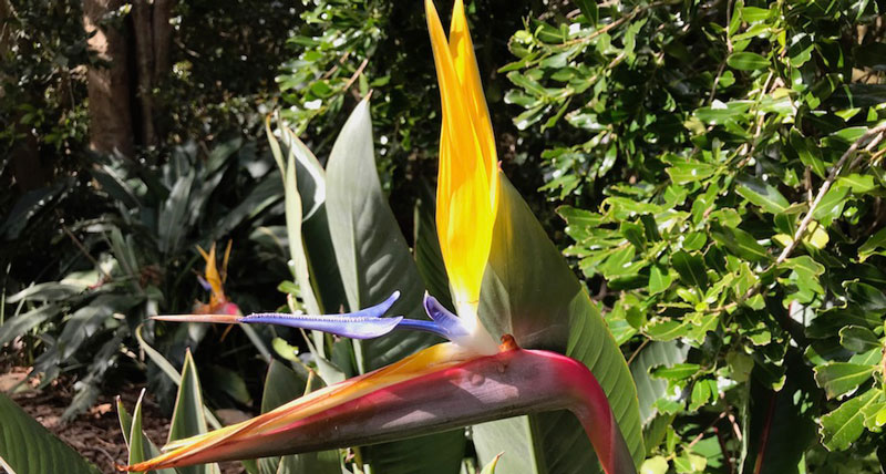 Bird_of_Paradise_South Africa