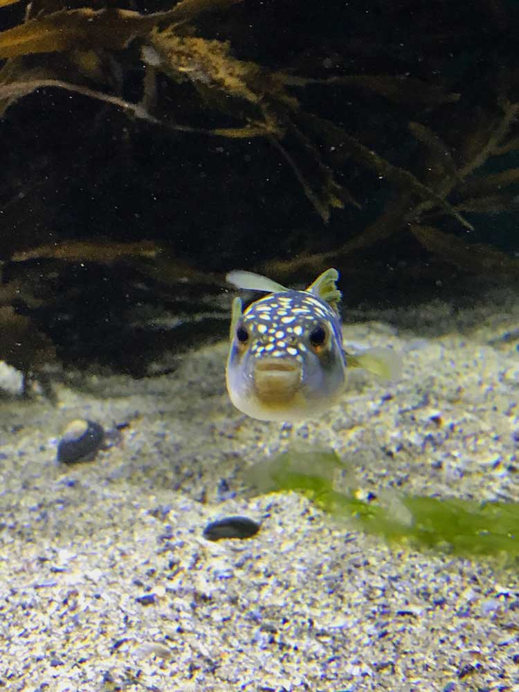 Clown-Fish-Cape-Town_South Africa